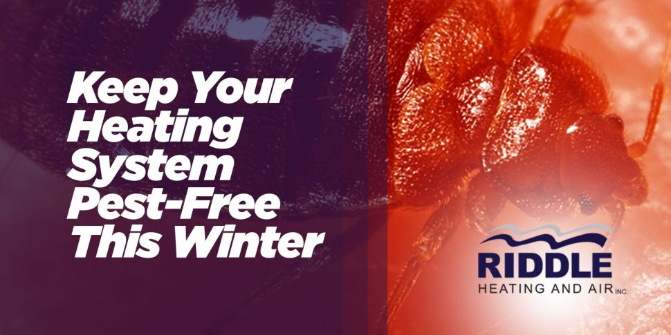 Keep Your Heating System Pest-Free This Winter
